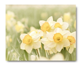 Daffodil Print, Spring Flower Photo, nature print, spring flower print, daffodil photograph, yellow, floral print, landscape photography