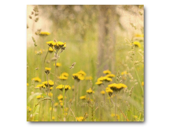 Landscape Flower Photography,  bright, yellow flowers,  nature print, wildflowers, country living, cottage chic
