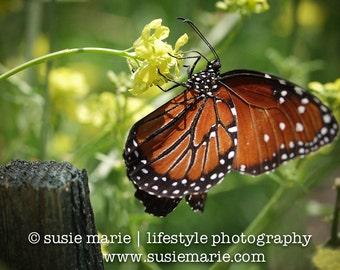 Monarch Butterfly - Orange, Black & White Monarch ButterflyMacro Nature Photography