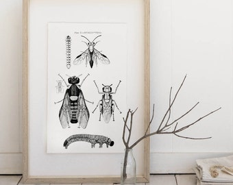 Flies, insects, encyclopedias Illustration, Digital Image INSTANT Download Sheet, Transfer To Pillows ,Burlap Bag, or Print on paper 016