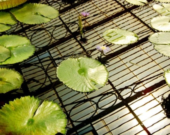 Lily pads print, Abstract nature, Waterlilies, Water reflections, Art deco style print, Green home décor, Garden photo print