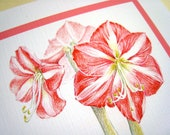 Amaryllis Christmas Card. Christmas Flowers Card. Botanical Art Card