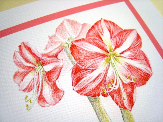 Amaryllis Christmas Card - Christmas Flowers, Floral Holiday Card
