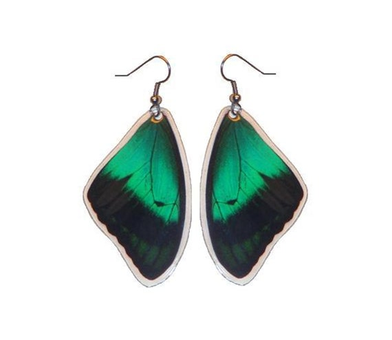 Real Green Butterfly Earrings - Papilio Albertisi