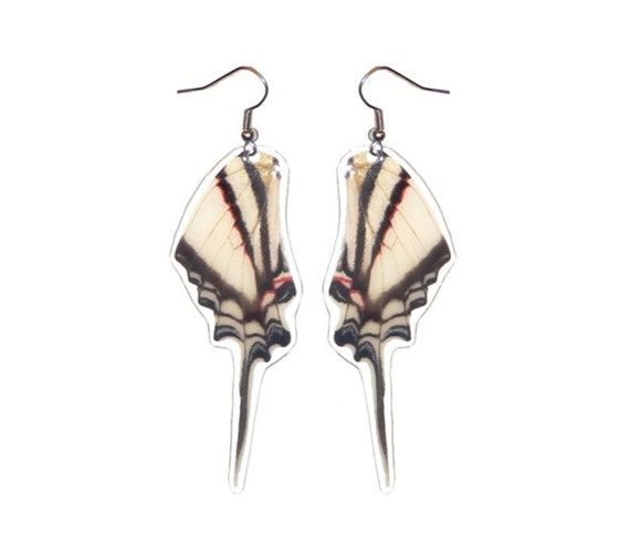 REAL butterfly wing earrings - Eurytides Agesilaus Autosilaus