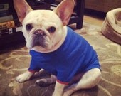 Small Dog T-Shirt, Multiple Colors FREE SHIPPING