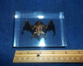REAL Bat Paperweight animal weird rodent bird taxidermy cave vampire part