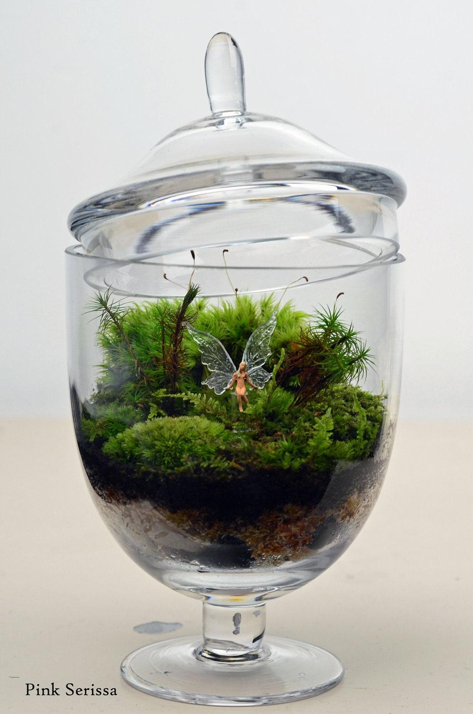 lush green live moss terrarium in miniature apothecary jar. Black Bedroom Furniture Sets. Home Design Ideas
