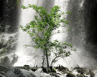 Tree and waterfall naturalistic wall art photo print - L'albero verde