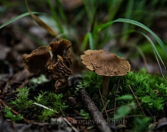 forest mushrooms photo, kitchen decor, 8x12 mushroom photography, fungi, earth tones, green moss brown mushrooms, woodland