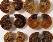 1.5 to 2 cm. Ammonite Pair 1 (One) pair - AAA - Madagascar EAMM234