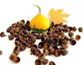 Natural Acorn Caps Supplies of Summer Oak. Fit to felt balls up to 15 mm
