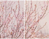 Cherry Blossom Prints Home Decor Office Decor Pink Flowers Spring Time
