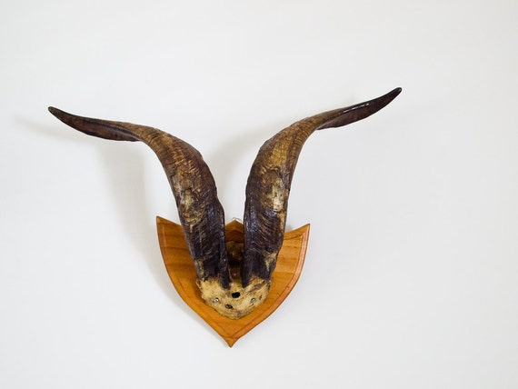 vintage goat horns mounted on wooden plaque