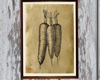 Vintage decoration Tasty carrots print Antique home decor AK244