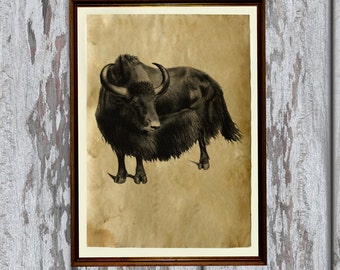 Vintage decoration wild yak print Antique home decor AK251
