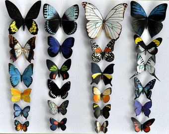 Butterfly Moth Magnets, Tropical Rainforest Butterflies, Set of 24 Insects Refrigerator Magnets
