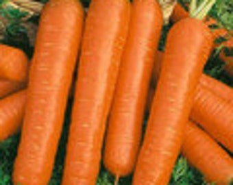 Carrot - Nantes - Heirloom - 100 Seeds - Great for Preppers - Canning - Juicing