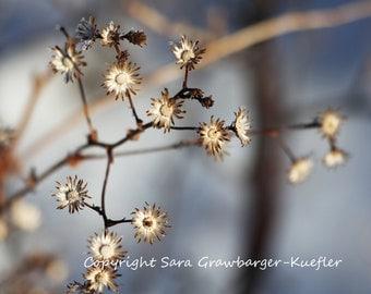 "Frozen Flowers - Fine Art Photograph - Winter Nature Decor - 8 x 10"""