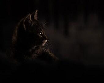 Cat photography print - cute kitten in dark shadows - black cat decor - baby animal nursery wall art - cat home decor - gothic feline art