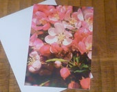 Ladybird / Lady Bug amongst the Beautiful Pink Blossom Photographic card.  Printed on semi- gloss card. A6 size. Blank.