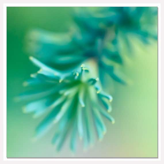 Items similar to teal blue tree wall photograph blue for Teal green bathroom accessories