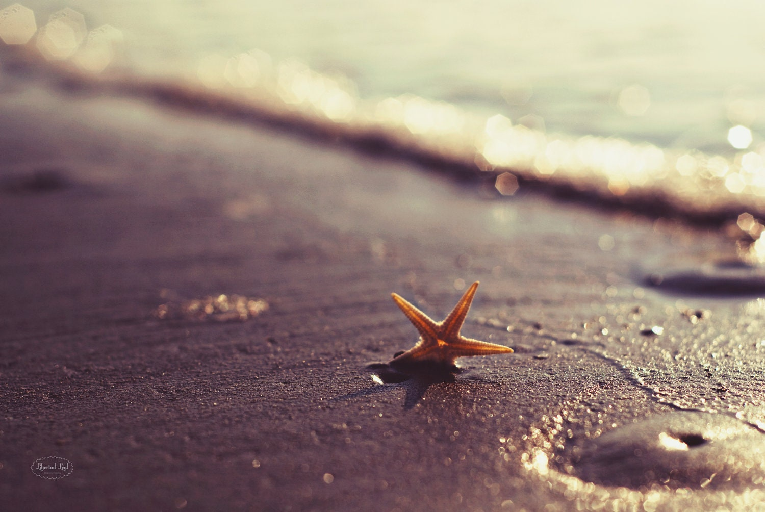 Summer beach photography wallpapers background beach photography voltagebd Images