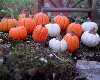 9 Fall miniature pumpkins in orange and white