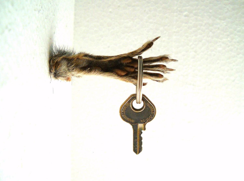 Squirrel Foot Key hook wall mount fantasy horror real