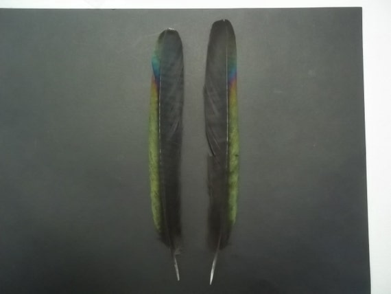 Magpie Tail Feathers, Earrings, Craft, Framing