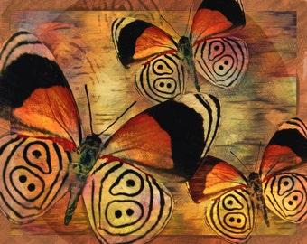 Golden Butterflies Sketch III  Fine Art  Prints Various Sizes