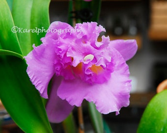 Fluffy Purple Pink Orchid Cottage Chic Wall Decor