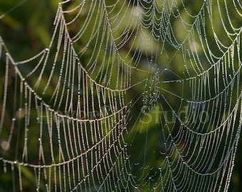 Dew Covered Spiderweb in the Prairie - 8x10 Nature Photograph