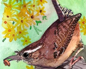 ACEO Limited Edition 10/25 - A carolina wren, Art print of an original watercolor painting, Bird art, Small housewarming gift idea