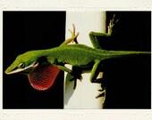 Green Anole Lizard handmade photo note card