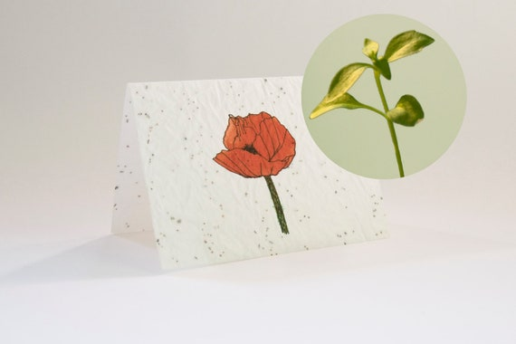 Greeting card Red poppy - blooming greeting card with flower seeds and watercolor illustration