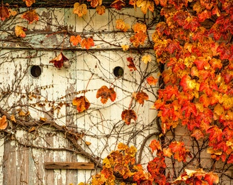 The Door With a Face -  Nature photography, landscape photography, fall, autumn, fine art print, leaves, new england