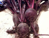 Bulls Blood  -  Beet and Greens