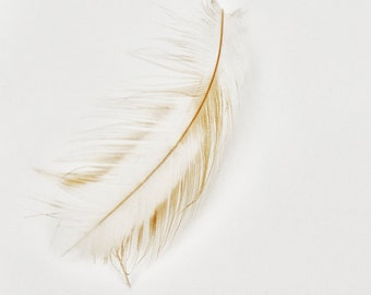 Baby Bird Feather Photograph  Minimalist  Macro Nature Photography  Soft Neutral Nursery Art  Home & Office Decor  fpoe