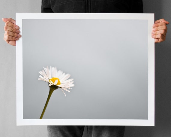 Minimalistic Daisy Photography - 16x20, Titanium Gray Daisy Flower Print, Wall Decor Print, Geometry Lines Grey Square