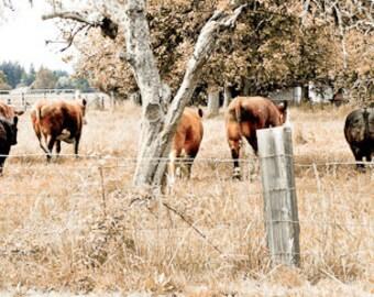"""Till the cows come home 6""""X15"""" photograph."""