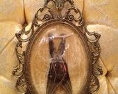 RESERVED- Sleeping Taxidermy Bat in Vintage Ornate Metal Frame