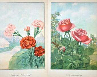 Vintage Carnation Rose Prints