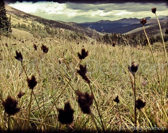 Valley of the Dolls - Rocky Mountain National Park - flora silhouette - dark mountains - moody clouds - 8x10 color matte print