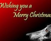 Greyhound Christmas Cards - Set of 5