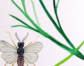 Insect Plant Original Watercolor Painting Botanical Nature Garden Aromatic Plant , White Green Grey, Contemporary Art Drawing Wall Art
