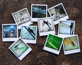 Dragonfly and Damselfly Photography- Set of 10 Polaroid Mini Magnets