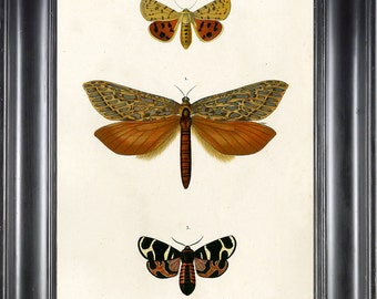 BUTTERFLY PRINT D'Orbigny 8x10 Botanical Art Print 2 Beautiful Antique French Butterflies Natural History Plate to Frame Interior Design