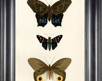 BUTTERFLY PRINT D'Orbigny 8x10 Botanical Art Print 5 Beautiful Antique French Butterflies Natural History Garden Nature Illustration