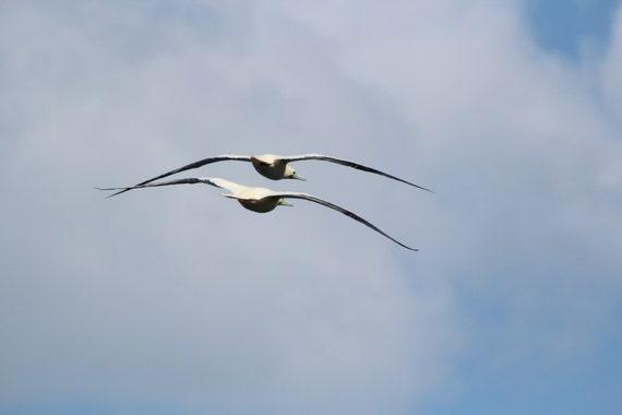 Note Card Blank - Albatross - Photography